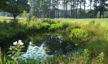 hoa_pond1
